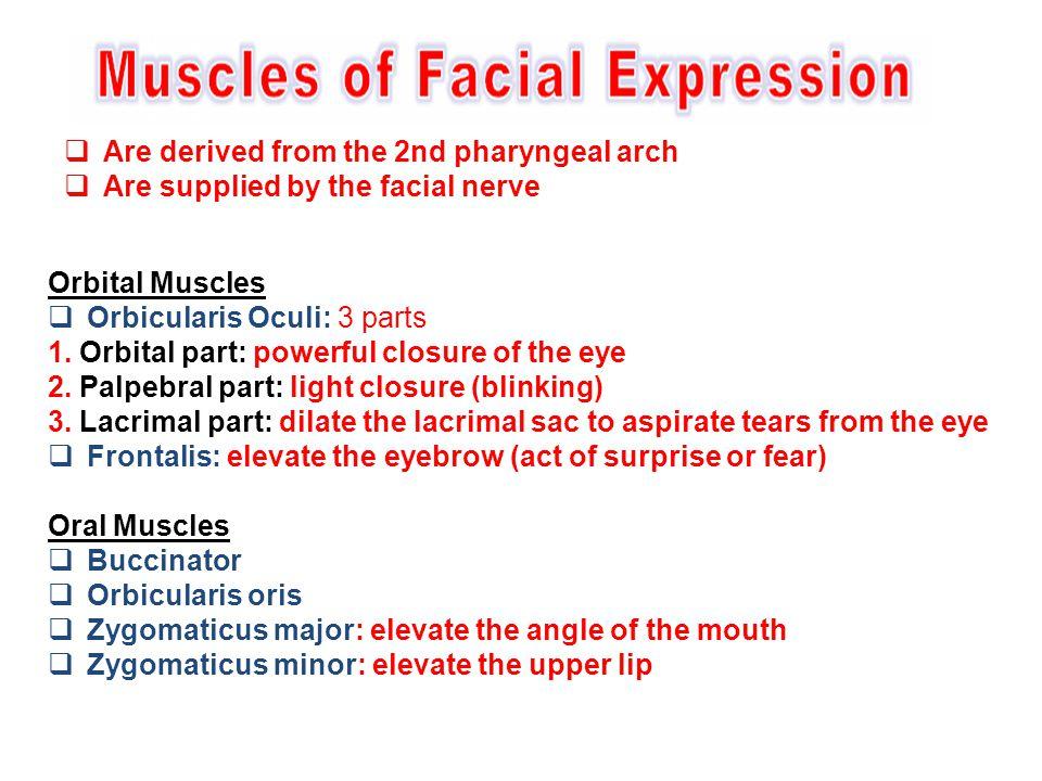 Orbital Muscles  Orbicularis Oculi: 3 parts 1. Orbital part: powerful closure of the eye 2. Palpebral part: light closure (blinking) 3. Lacrimal part