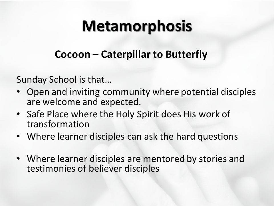 Metamorphosis Cocoon – Caterpillar to Butterfly Sunday School is that… Open and inviting community where potential disciples are welcome and expected.