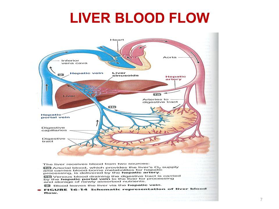LIVER BLOOD FLOW 7