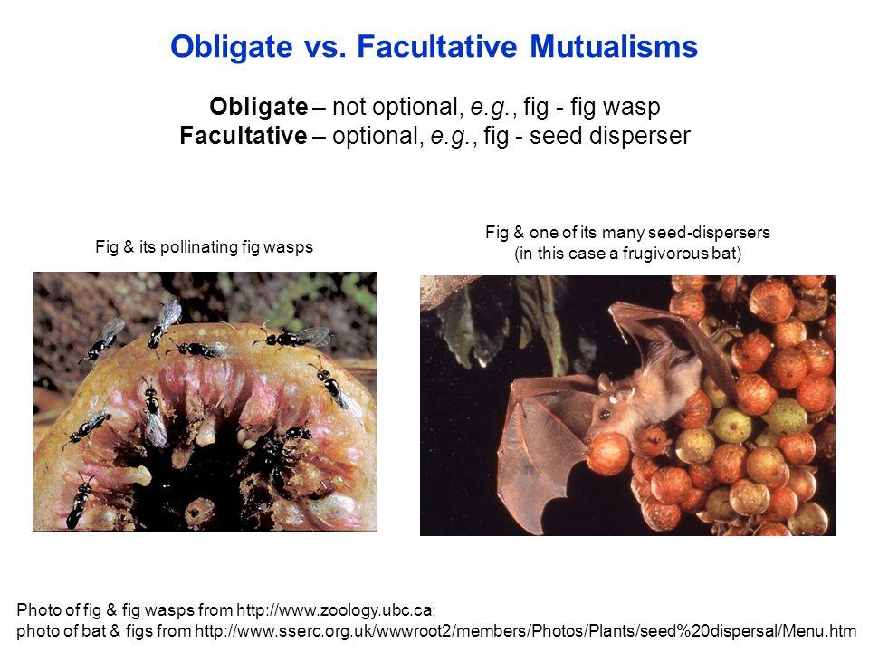 Obligate – not optional, e.g., fig - fig wasp Facultative – optional, e.g., fig - seed disperser Obligate vs.
