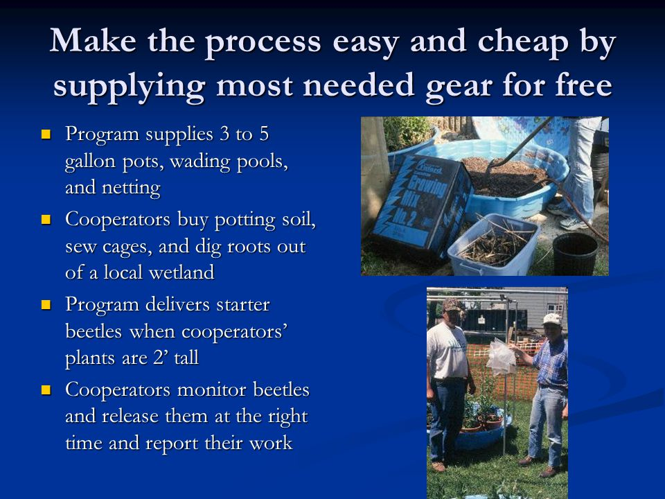Make the process easy and cheap by supplying most needed gear for free Program supplies 3 to 5 gallon pots, wading pools, and netting Program supplies 3 to 5 gallon pots, wading pools, and netting Cooperators buy potting soil, sew cages, and dig roots out of a local wetland Cooperators buy potting soil, sew cages, and dig roots out of a local wetland Program delivers starter beetles when cooperators' plants are 2' tall Program delivers starter beetles when cooperators' plants are 2' tall Cooperators monitor beetles and release them at the right time and report their work Cooperators monitor beetles and release them at the right time and report their work
