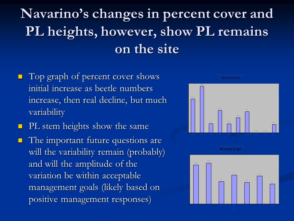 Navarino's changes in percent cover and PL heights, however, show PL remains on the site Top graph of percent cover shows initial increase as beetle numbers increase, then real decline, but much variability Top graph of percent cover shows initial increase as beetle numbers increase, then real decline, but much variability PL stem heights show the same PL stem heights show the same The important future questions are will the variability remain (probably) and will the amplitude of the variation be within acceptable management goals (likely based on positive management responses) The important future questions are will the variability remain (probably) and will the amplitude of the variation be within acceptable management goals (likely based on positive management responses)