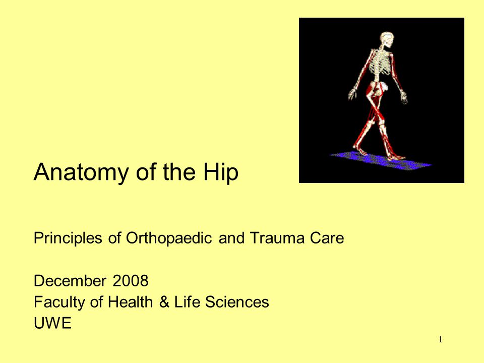 1 Anatomy of the Hip Principles of Orthopaedic and Trauma Care December 2008 Faculty of Health & Life Sciences UWE