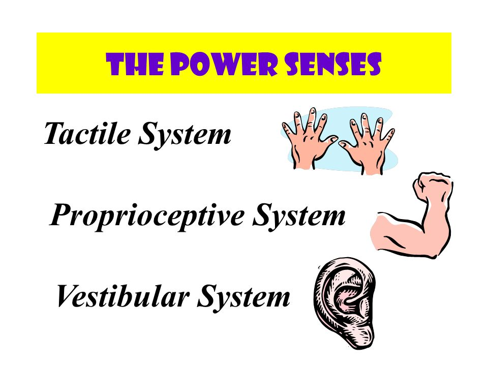 Proactively Schedule Sensory Activities throughout the day Use the Power Senses throughout the day in order to help a person alert, attend, act, and react non-contingent on behavior.