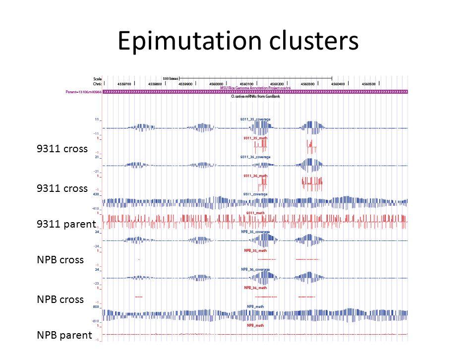 Epimutation clusters 9311 parent NPB parent NPB cross 9311 cross