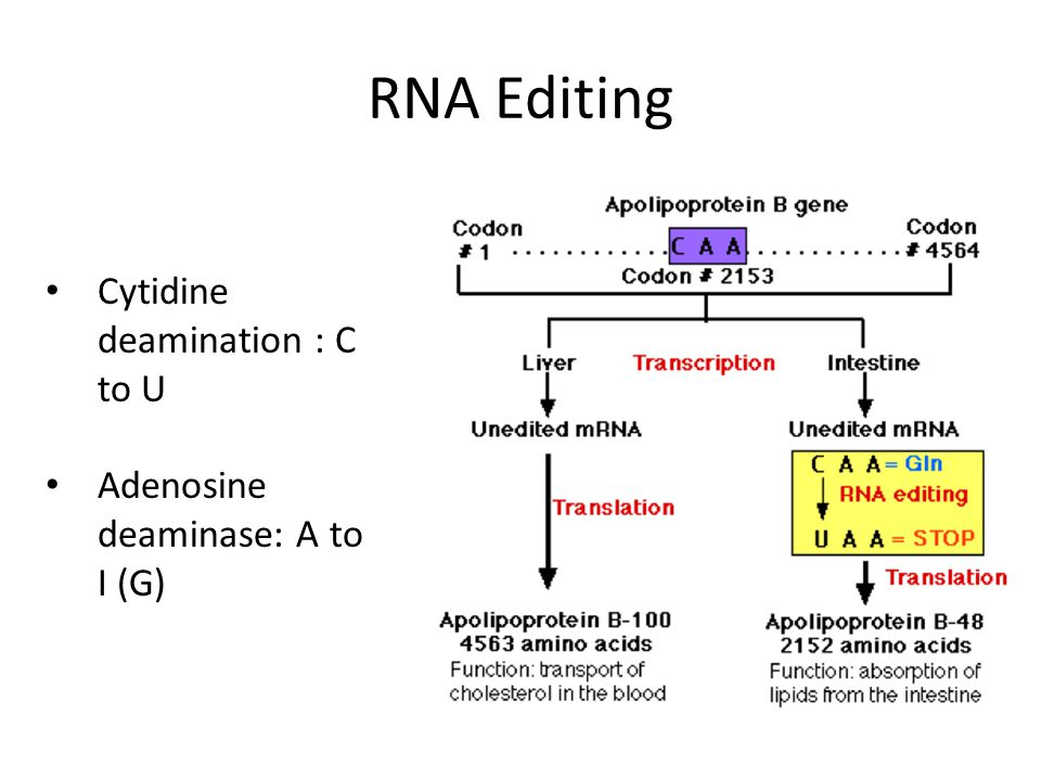 RNA Editing Cytidine deamination : C to U Adenosine deaminase: A to I (G)
