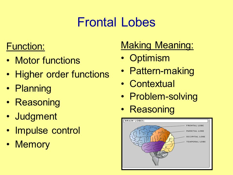Frontal Lobes Function: Motor functions Higher order functions Planning Reasoning Judgment Impulse control Memory Making Meaning: Optimism Pattern-making Contextual Problem-solving Reasoning