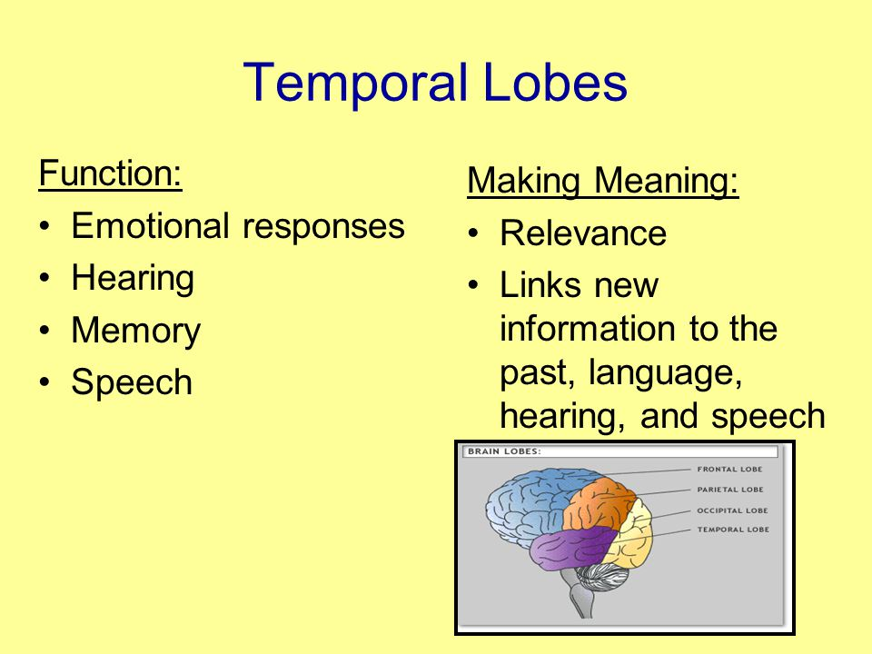 Temporal Lobes Function: Emotional responses Hearing Memory Speech Making Meaning: Relevance Links new information to the past, language, hearing, and speech