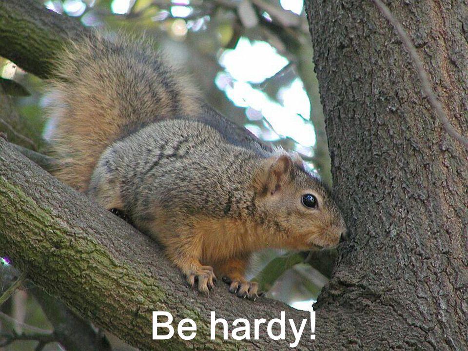 Be hardy!