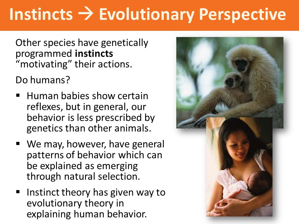"Instincts  Evolutionary Perspective Other species have genetically programmed instincts ""motivating"" their actions. Do humans?  Human babies show ce"