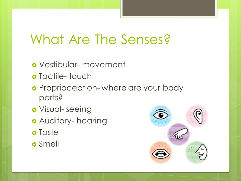 What Are The Senses?  Vestibular- movement  Tactile- touch  Proprioception- where are your body parts?  Visual- seeing  Auditory- hearing  Taste
