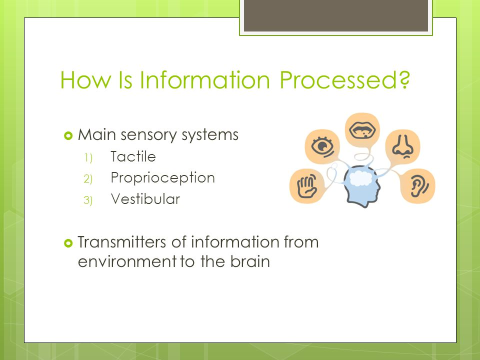 How Is Information Processed?  Main sensory systems 1) Tactile 2) Proprioception 3) Vestibular  Transmitters of information from environment to the