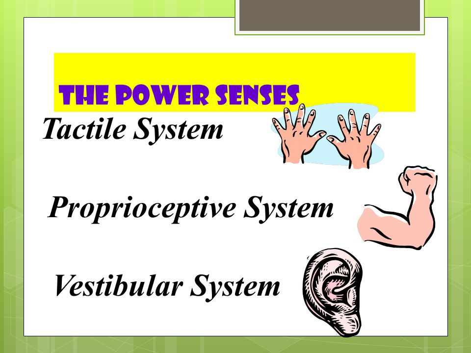 T he Power Senses  Vestibular  Movement  Proprioception  Input through joints and muscles  Tactile  Deep Pressure Touch