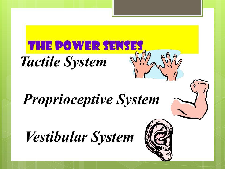 The Power Senses Tactile System Proprioceptive System Vestibular System