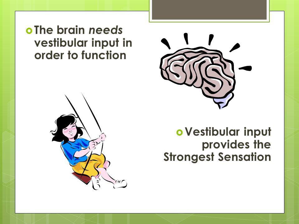  The brain needs vestibular input in order to function  Vestibular input provides the Strongest Sensation