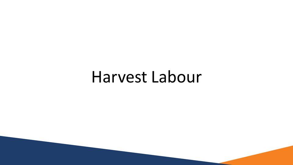 Harvest Labour