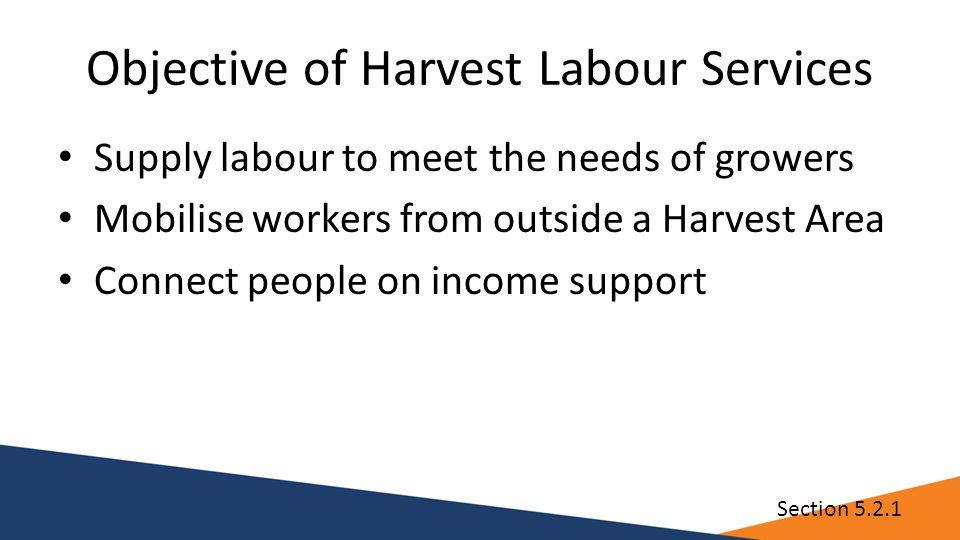 Objective of Harvest Labour Services Supply labour to meet the needs of growers Mobilise workers from outside a Harvest Area Connect people on income