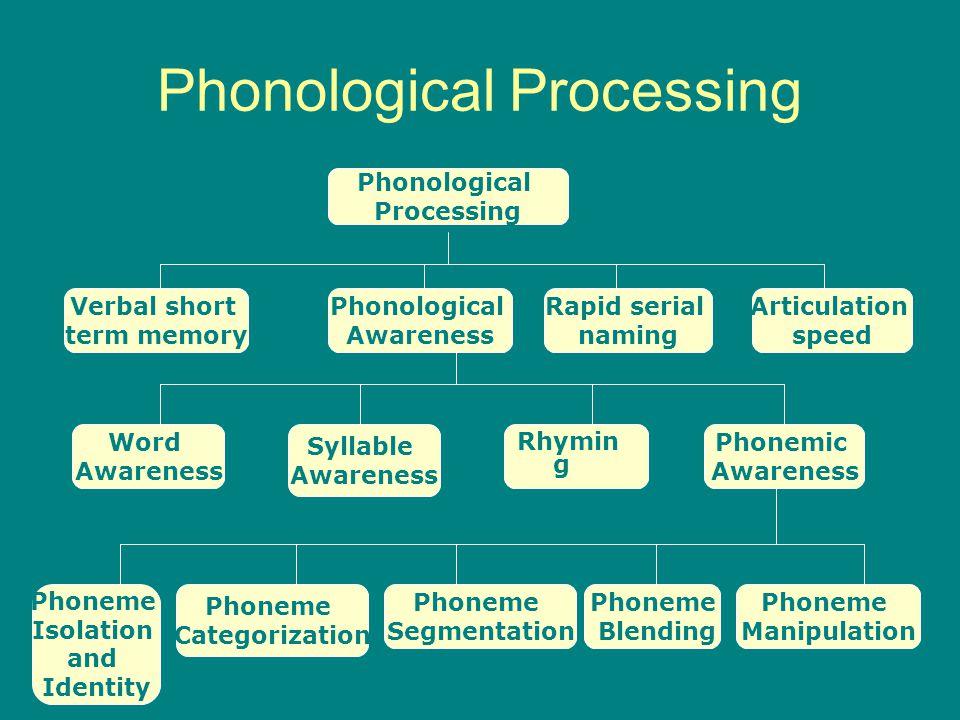 Phonological Processing Phonological Processing Phonological Awareness Rapid serial naming Articulation speed Verbal short term memory Phonemic Awaren
