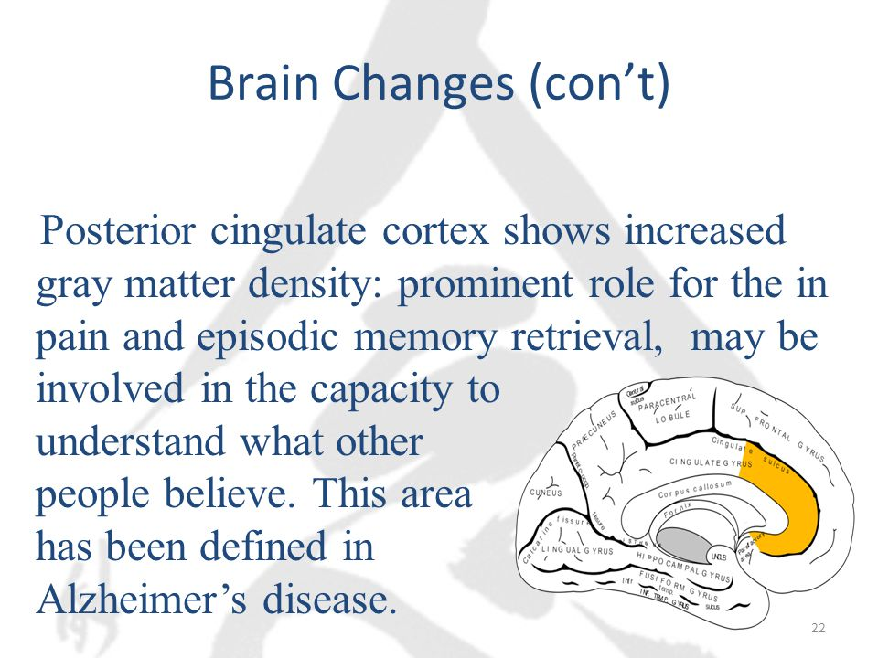 Brain Changes (con't) Posterior cingulate cortex shows increased gray matter density: prominent role for the in pain and episodic memory retrieval, may be involved in the capacity to understand what other people believe.
