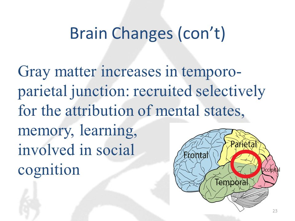 Brain Changes (con't) Gray matter increases in temporo- parietal junction: recruited selectively for the attribution of mental states, memory, learning, involved in social cognition 23