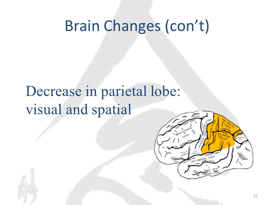Brain Changes (con't) 25 Decrease in parietal lobe: visual and spatial