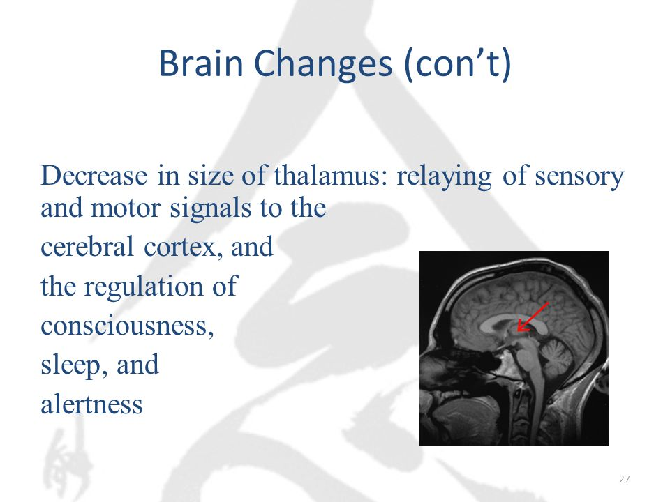Brain Changes (con't) Decrease in size of thalamus: relaying of sensory and motor signals to the cerebral cortex, and the regulation of consciousness, sleep, and alertness 27