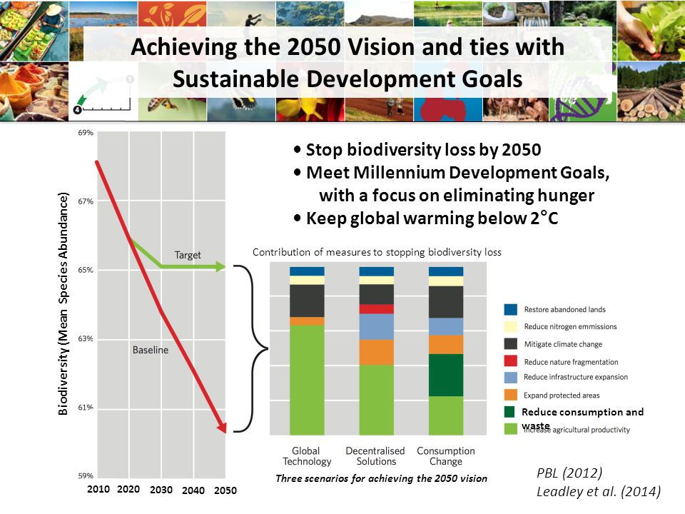 Achieving the 2050 Vision and ties with Sustainable Development Goals Stop biodiversity loss by 2050 Meet Millennium Development Goals, with a focus on eliminating hunger Keep global warming below 2°C Biodiversity (Mean Species Abundance) Contribution of measures to stopping biodiversity loss Three scenarios for achieving the 2050 vision Reduce consumption and waste 2010 2020 2030 20402050 PBL (2012) Leadley et al.