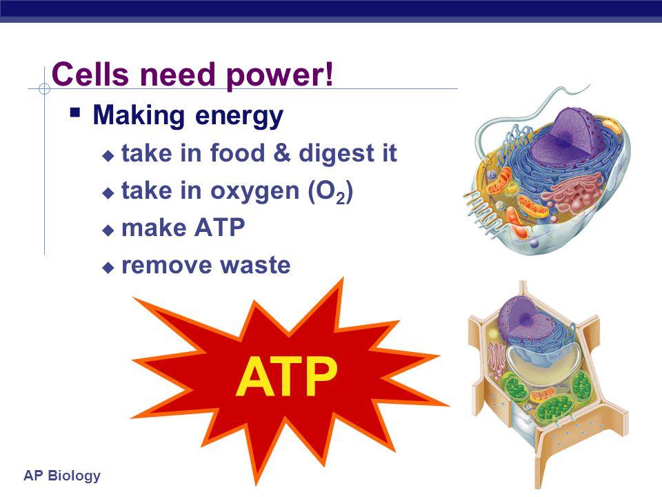 AP Biology 2007-2008 Making Energy ATP