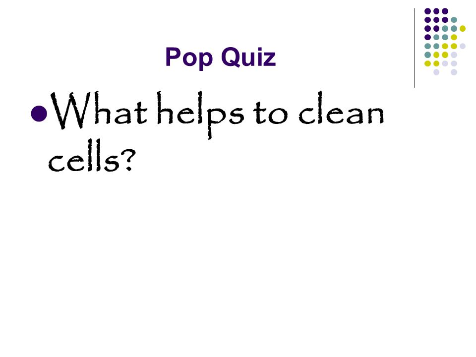 Pop Quiz What helps to clean cells
