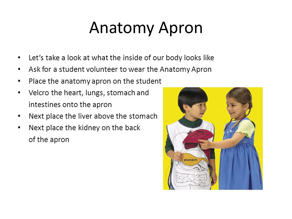 Anatomy Apron Let's take a look at what the inside of our body looks like Ask for a student volunteer to wear the Anatomy Apron Place the anatomy apron on the student Velcro the heart, lungs, stomach and intestines onto the apron Next place the liver above the stomach Next place the kidney on the back of the apron
