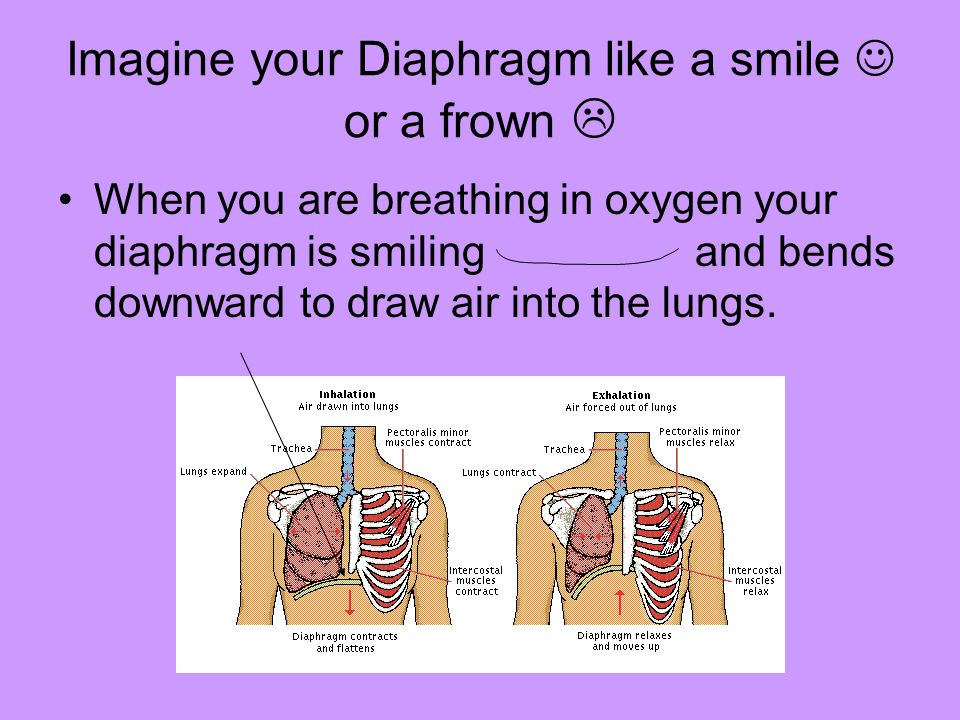 Imagine your Diaphragm like a smile or a frown  When you are breathing in oxygen your diaphragm is smiling and bends downward to draw air into the lu