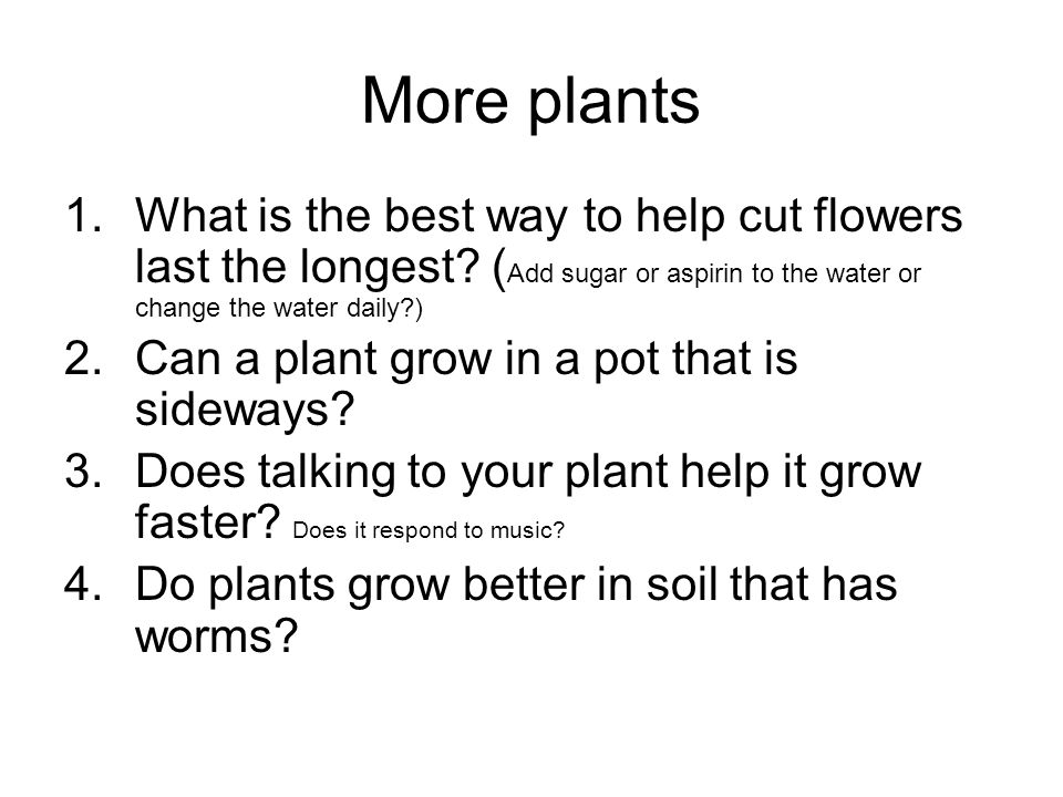 More plants 1.What is the best way to help cut flowers last the longest.