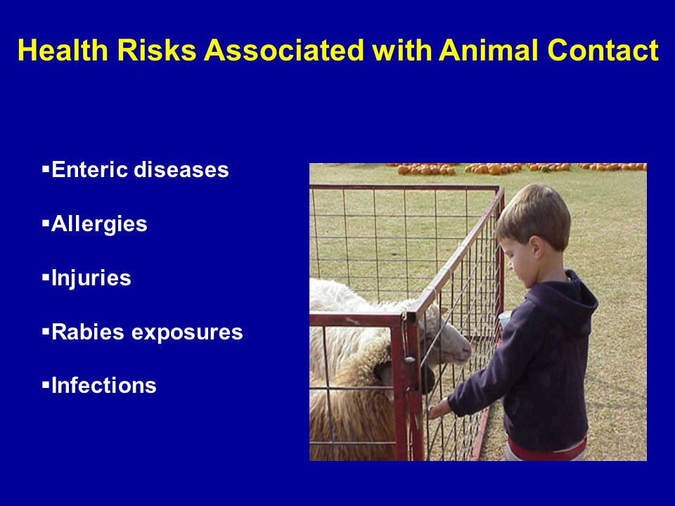  Enteric diseases  Allergies  Injuries  Rabies exposures  Infections Health Risks Associated with Animal Contact
