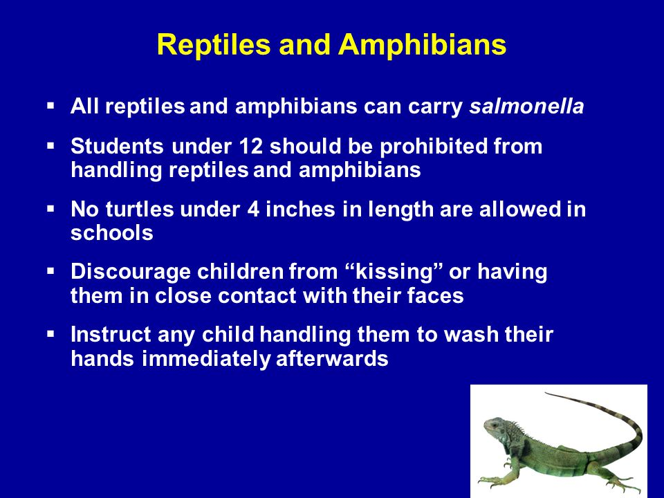 Reptiles and Amphibians  All reptiles and amphibians can carry salmonella  Students under 12 should be prohibited from handling reptiles and amphibi