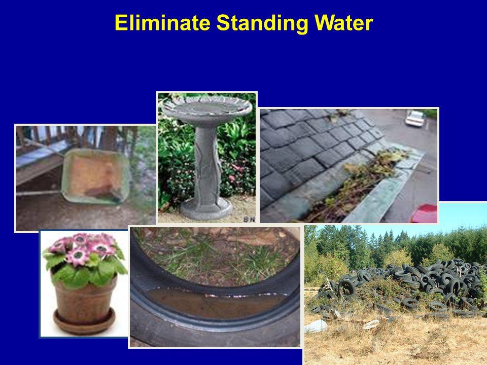 Eliminate Standing Water
