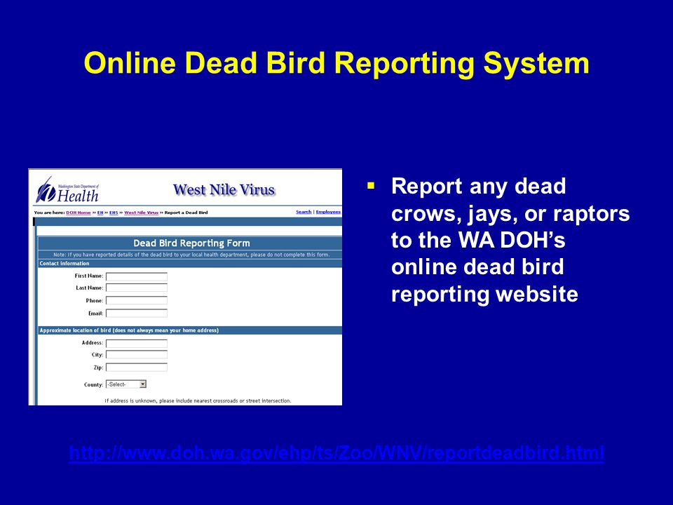 Online Dead Bird Reporting System  Report any dead crows, jays, or raptors to the WA DOH's online dead bird reporting website http://www.doh.wa.gov/e