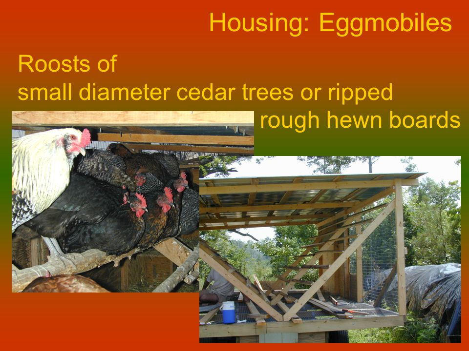 Housing: Eggmobiles Roosts of small diameter cedar trees or ripped rough hewn boards