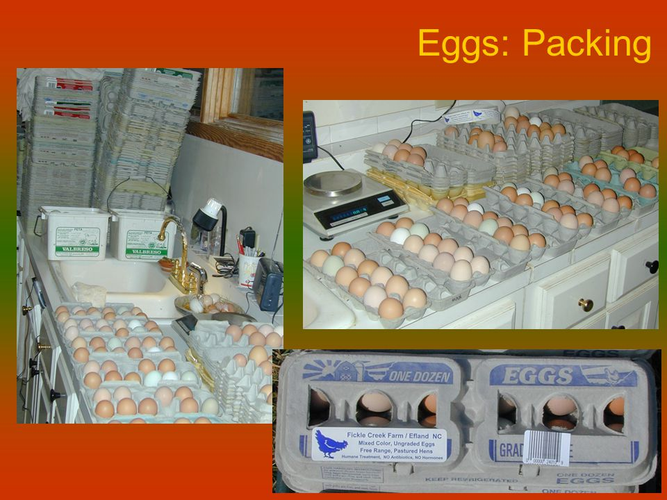 Eggs: Packing