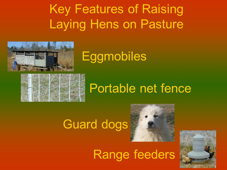 Key Features of Raising Laying Hens on Pasture Eggmobiles Portable net fence Guard dogs Range feeders