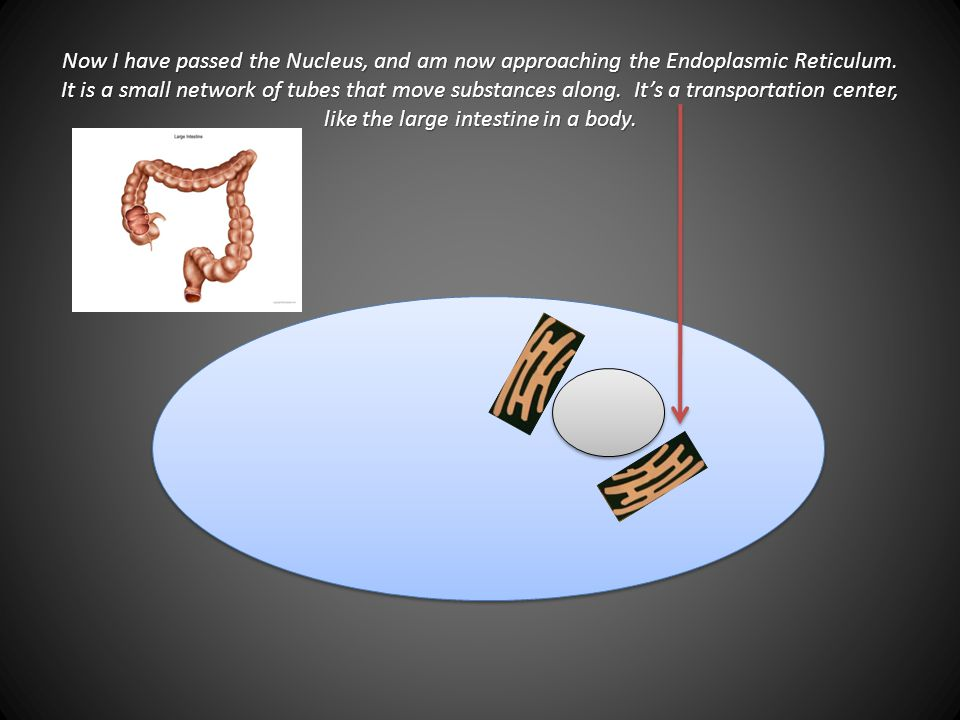 Now I have passed the Nucleus, and am now approaching the Endoplasmic Reticulum.