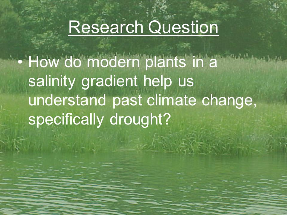 Research Question How do modern plants in a salinity gradient help us understand past climate change, specifically drought?