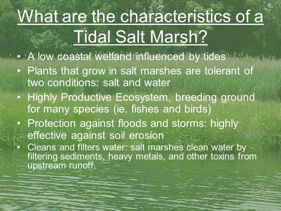 What are the characteristics of a Tidal Salt Marsh.