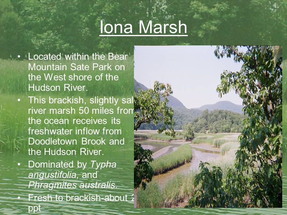 Iona Marsh Located within the Bear Mountain Sate Park on the West shore of the Hudson River.