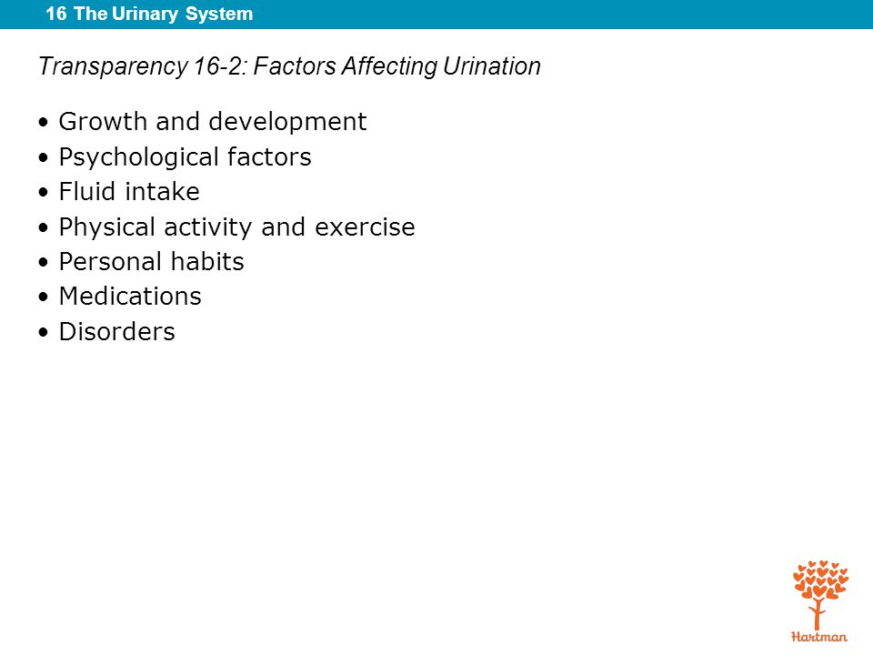 16 The Urinary System Transparency 16-2: Factors Affecting Urination Growth and development Psychological factors Fluid intake Physical activity and e