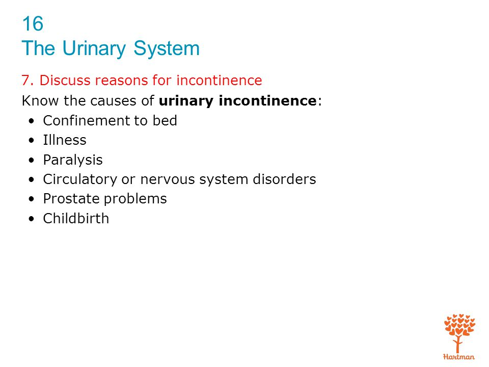 16 The Urinary System 7. Discuss reasons for incontinence Know the causes of urinary incontinence: Confinement to bed Illness Paralysis Circulatory or