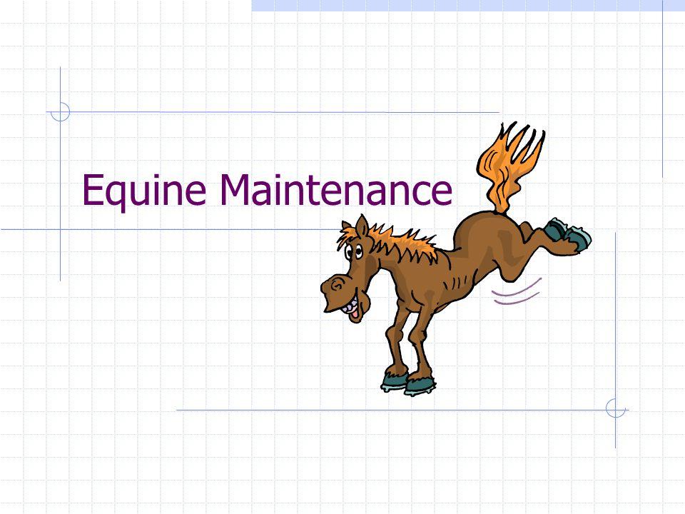 Equine Maintenance
