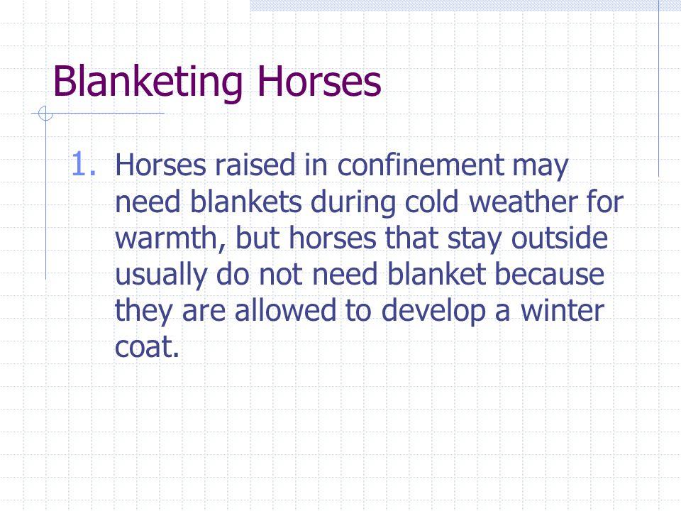 Blanketing Horses 1.