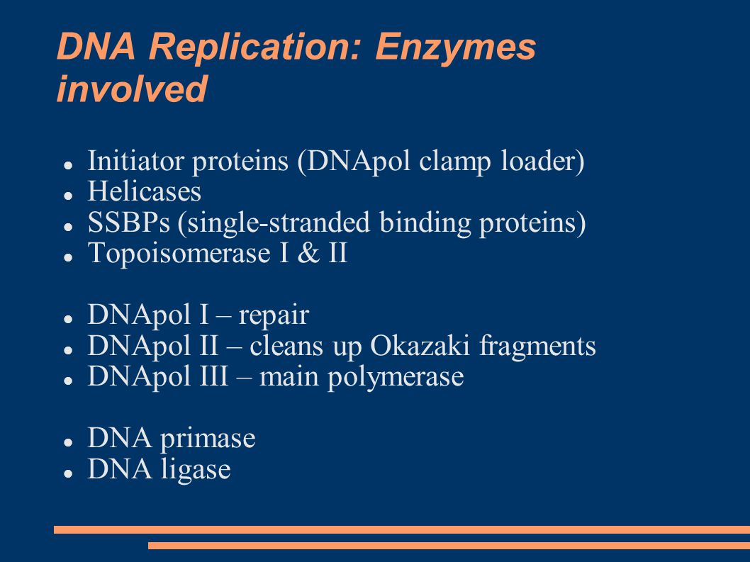 DNA Replication: Enzymes involved Initiator proteins (DNApol clamp loader) Helicases SSBPs (single-stranded binding proteins) Topoisomerase I & II DNApol I – repair DNApol II – cleans up Okazaki fragments DNApol III – main polymerase DNA primase DNA ligase