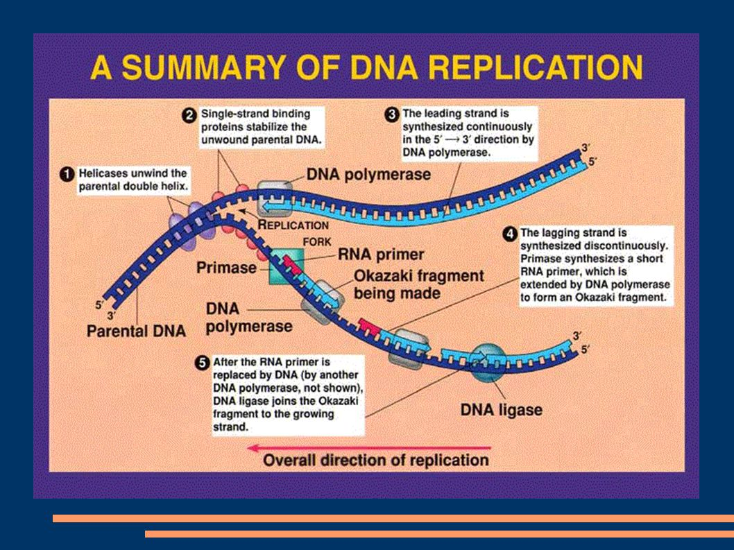 DNA Replication:
