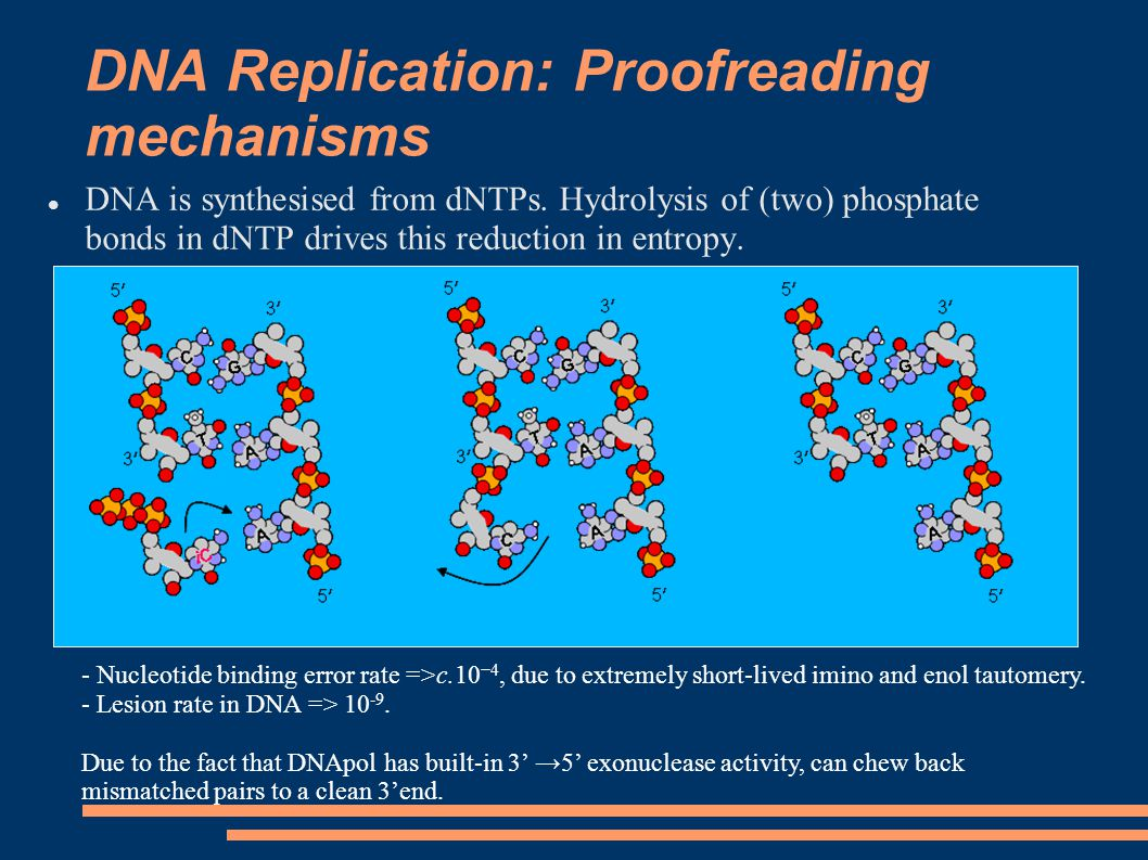 DNA Replication: Proofreading mechanisms DNA is synthesised from dNTPs.